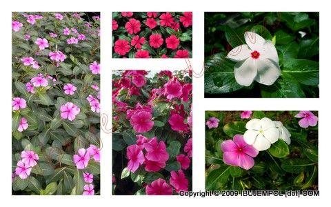 Hypertension plants