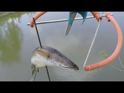 ย งปลาช อนใหญ ม นมาก ม นเยอะจร งๆ Youtube