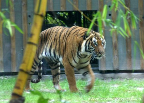 The Zoo in Naples - outdoor adventure for the whole family in southwest Florida