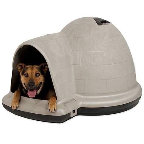 Igloo Dog House Petmate Indigo Dog Home Dog Igloo Petco Igloo Dog House Cool Dog Houses Dog House