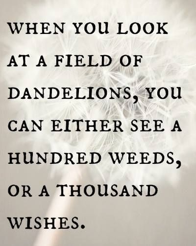 When you look at a field of dandelions, you can either see a hundred weeds, or a thousand wishes......or medicine