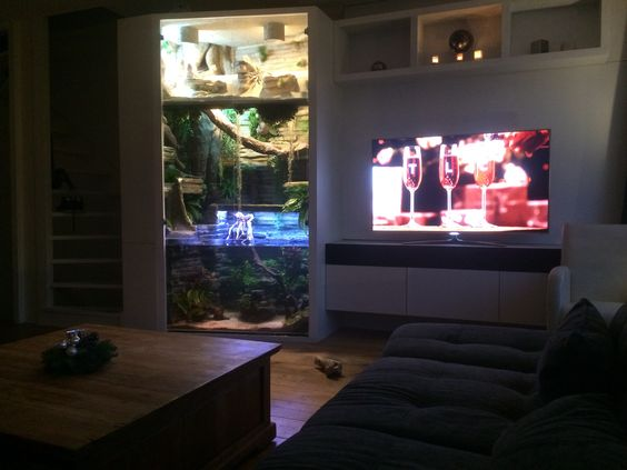 My terrarium aquarium running for 2 months my tropical for Well water for fish tank
