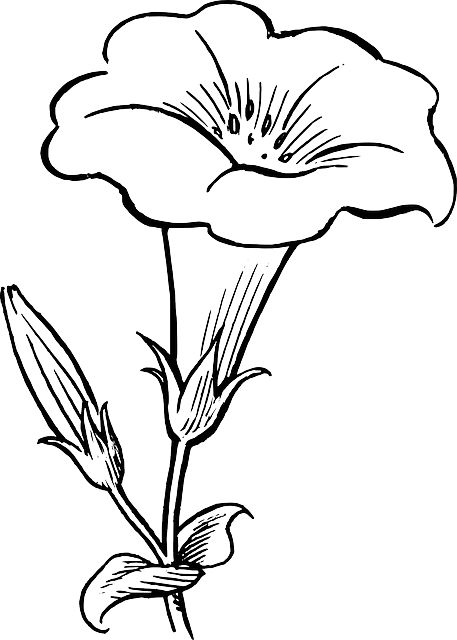 D Line Drawing Easy : Black outline drawing flower white flowers free