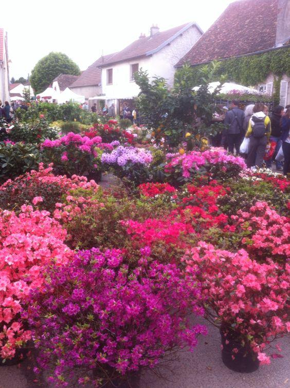 9 mai 2015 Foire aux plantes rares a Bézouotte (côte d'or)