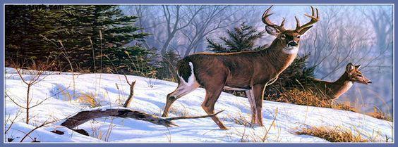 Deer In Snow Facebook Cover