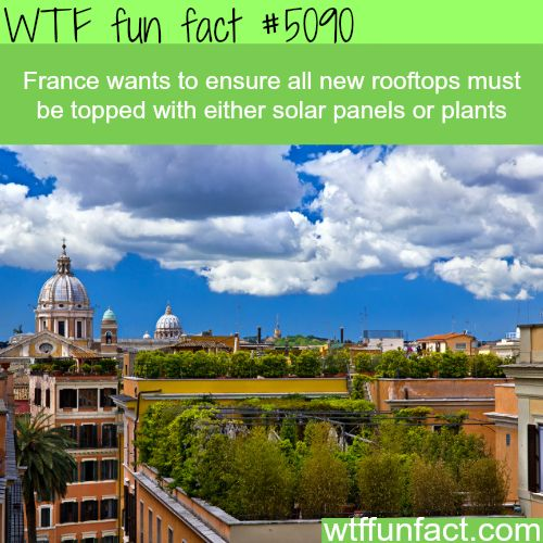 France law requires new rooftops to be topped with solar panels or plants - WTF fun facts| See more DIY projects/lifehacks here gwyl.io/