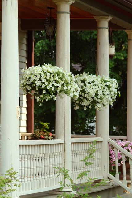 Beautiful shock wave and hanging baskets on pinterest for Front porch hanging plants
