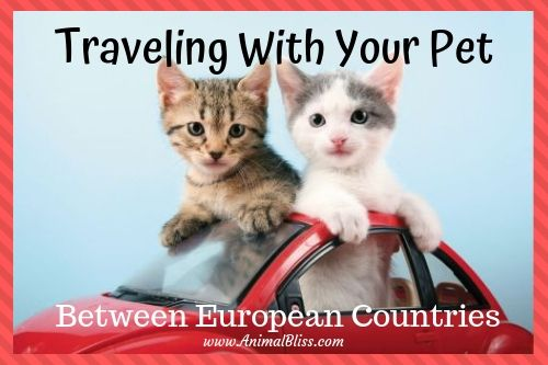 Traveling With Your Pet Between European Countries Pets Your Pet Cat Travel