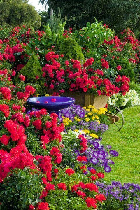 Tm Esquentada On Twitter Beautiful Gardens Plants Gorgeous Gardens