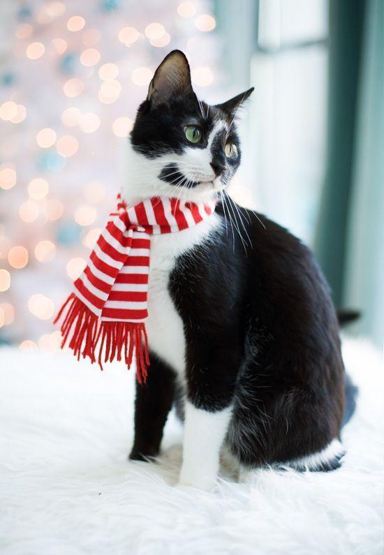 猫画像 やっぱりかわいい クリスマスな猫画像 10選 猫知る クリスマス 動物 猫の愛 可愛すぎる動物