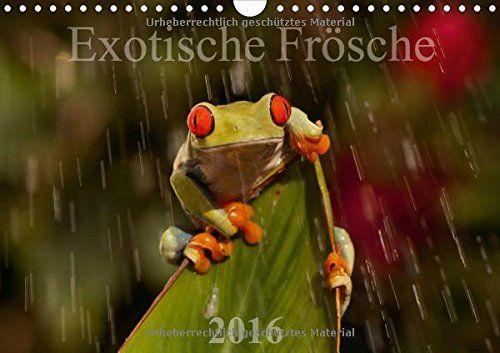 Exotische Frösche (Wandkalender 2016 DIN A4 quer): Seltene Einblicke in die Wunderwelt der Exotische Frösche (Monatskalender, 14 Seiten) (Calvendo Tiere) von Axel Hilger http://www.amazon.de/dp/3664206711/ref=cm_sw_r_pi_dp_9.Eiwb01BCG83