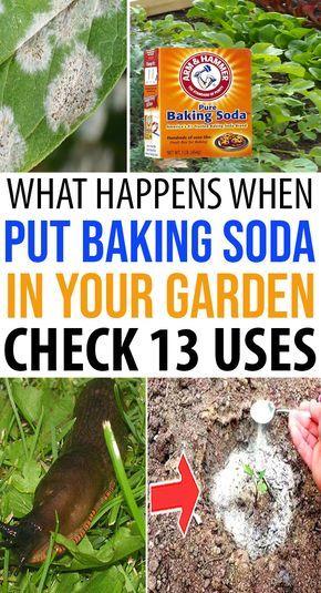 329e28ce2b8f7984c3e951b00db621d4 - Is Borax Safe For Vegetable Gardens