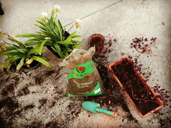 Hoje teve manutenção de jardim!   #folhasensitiva #chamaafolhasensitiva #chama #plantas #plantar #jardins #jardinagem #ambientação #saopaulo #instagram #verde #terra #pinheiros