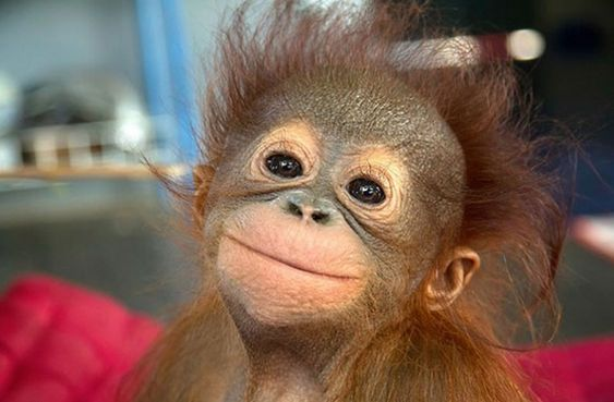 25+ Animals Who Turned Out to Be Hilarious Meme Material https://kaftipiperia.com/25-apistefta-asteies-fotografies-zoon-pou-prepei-na-deis-amesa/ #kaftipiperia #likeforlike #like4like #follow4follow #funny #news #instagood #photooftheday #tbt #beautiful #happy #fashion #picoftheday #instadaily #fun #tagsforlikes #smile #repost #funnypics #fynnypictures