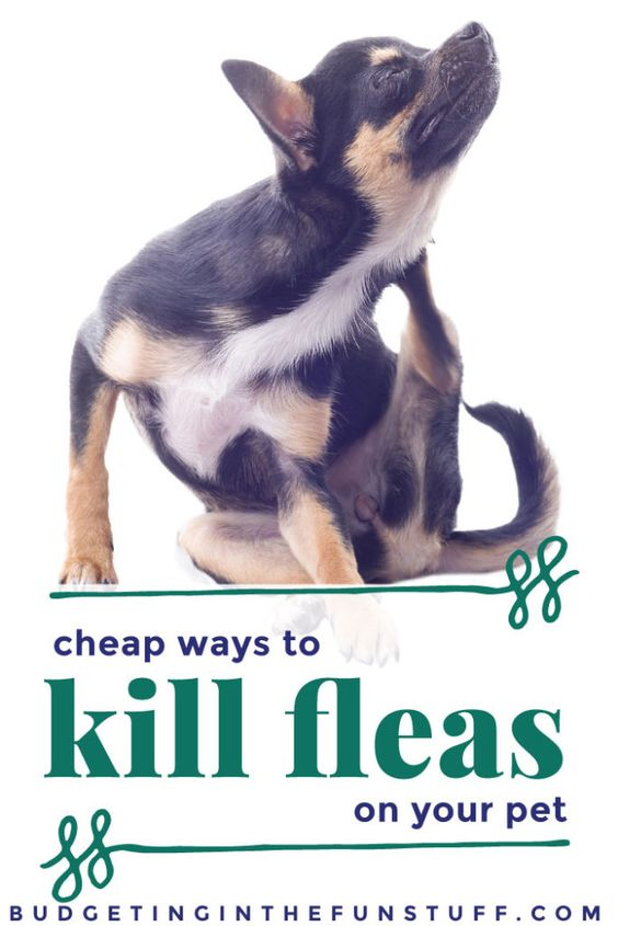 Natural Ways For Dogs To Repel Fleas