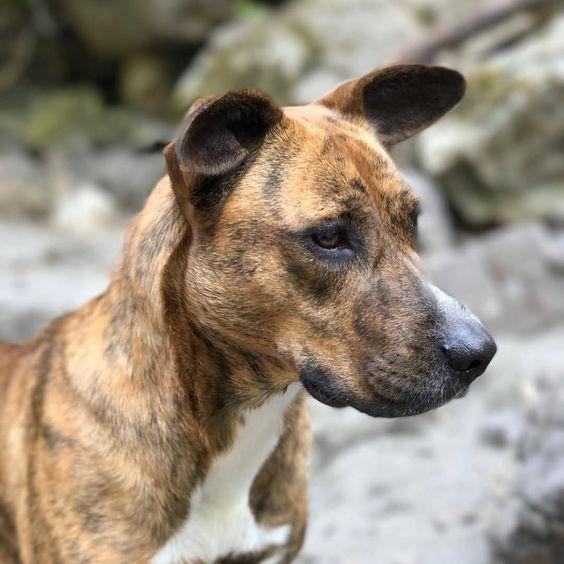 128 Best Treeing Tennessee Brindle Dog Names Dog Names Dog