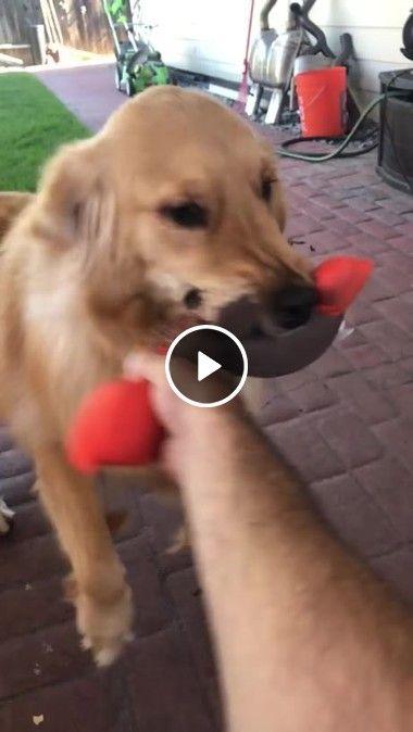 Esse brinquedo é meu não te empresto