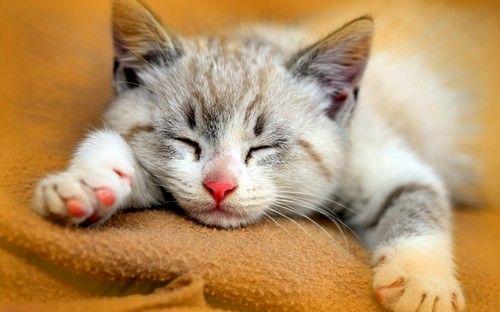 صور قطط ومعلومات كاملة عن القطط Cute Cats Beautiful Cats Cat Facts