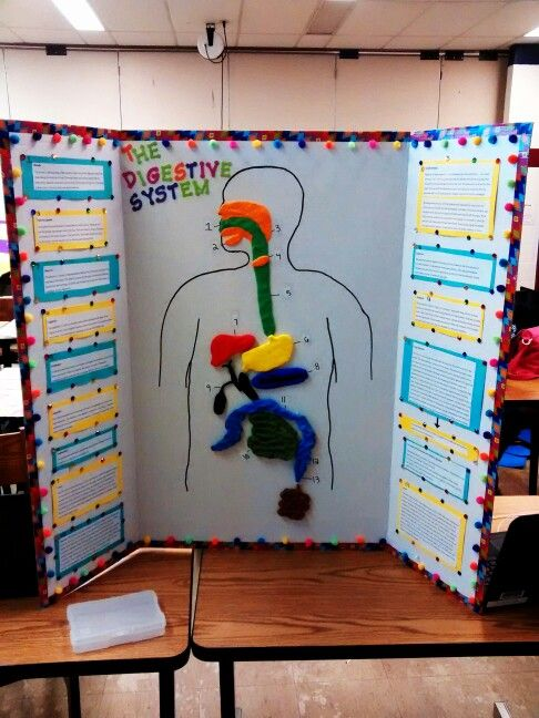Digestive system project Science Pinterest Projects
