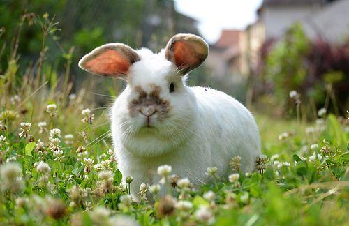 Aussenhaltung Kaninchenhaltung Kaninchen Kaninchen Ernahrung