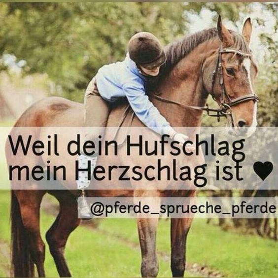 weil dein hufschlag mein herzschlag ist pferde pinterest inspirational horse quotes. Black Bedroom Furniture Sets. Home Design Ideas