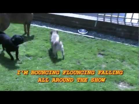 Very funny video about 'The pug that couldn't run' Loca the pug sings :-)