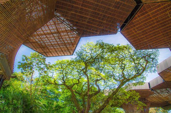 Tema: Libre  Titulo: Slices of heaven - Rebanadas del cielo  Lugar: Jardin Botanico, Medellin  Fotografia: Robert J. Howard