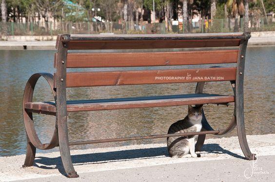Türkei, Turkey, Titreyengöl, park bench with cat, photography by Jana Bath 2014, http://www.foto-bath.de