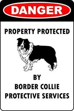 9be6a84158cdf44cadff04fcb4d731d3--aluminum-metal-border-collie.jpg (236×354)