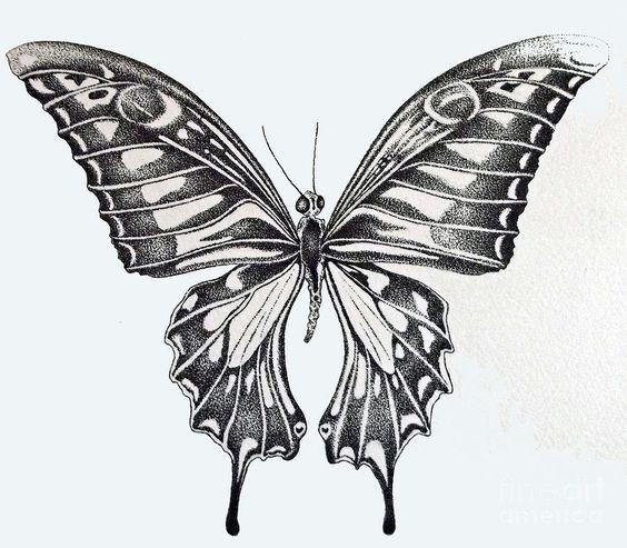 Butterfly Drawings: Butterfly Bloom 2 Canvas Print / Canvas Art By Mark Lemon