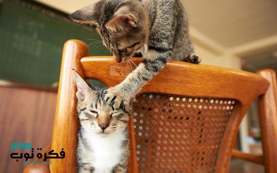أجمل صور قطط مضحكة 2019 قطط حزينة روعة 5 Funny Cat Wallpaper Funny Cats Cats And Kittens