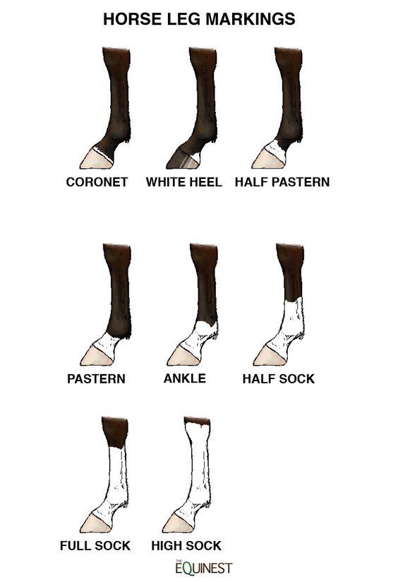 Horse Leg Markings