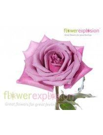 Purple Fragrance