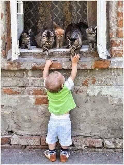 Awwwww, ain't that sweet… #cats #cat