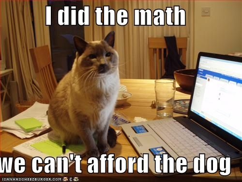funny-pictures-cat-did-the-math-and-you-cannot-afford-the-dog ...