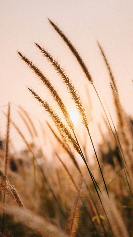 Image About Photography In Nature By Ysm On We Heart It Nature Wallpaper Aesthetic Backgrounds Nature Photography