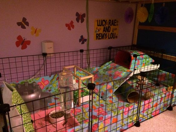 C c cage guinea pigs and pigs on pinterest for Simple guinea pig cage