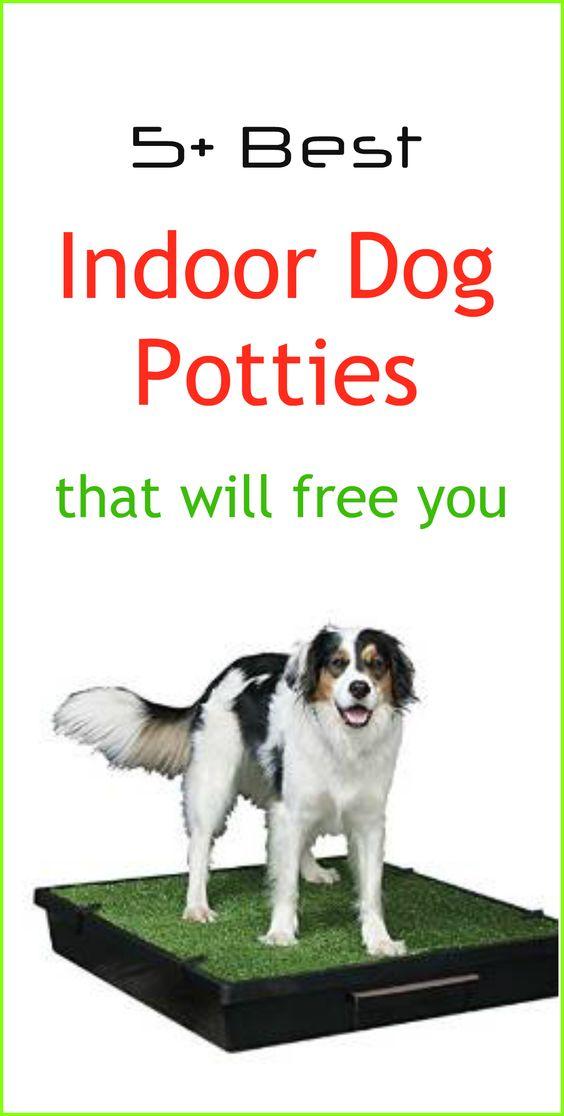 Indoor Dog Potty Indoor And A Walk On Pinterest