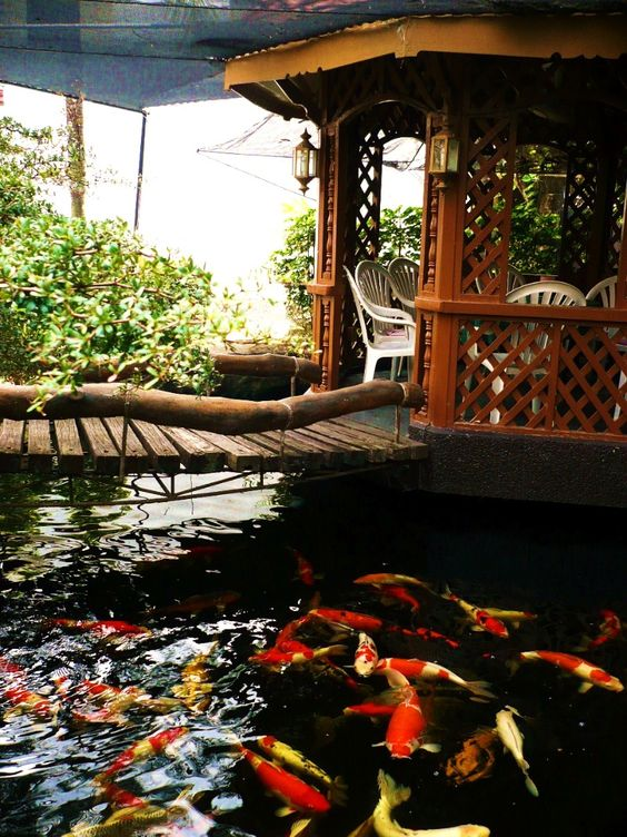 Koi pond around a nice big gazebo to just hang out and for Koi pond plant ideas