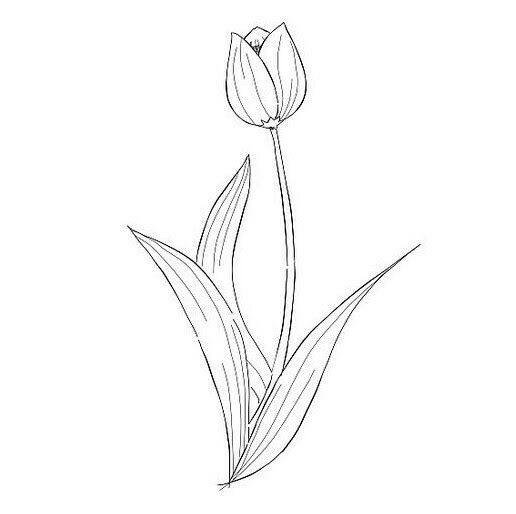 Paling Populer 12 Contoh Gambar Bunga Tulip Yang Mudah Digambar Gambar Bunga Yang Paling Mudah Brainly Co Id Simpl Gambar Bunga Bunga Tulip Menggambar Bunga