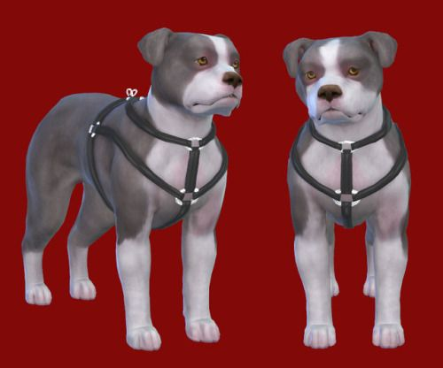 Coloresurbanos Harness For Our Pets Cat Ts4 Pets Cc Finds Sims 4 Pets Sims Pets Dog Harness
