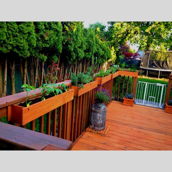 Herb Pepper Garden On The Deck Garden Outdoors 400 x 300