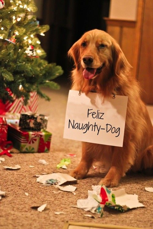 """Giggles over a CHRISTMAS picture that includes a dog with sign that reads, """"Feliz Naughty-Dog"""".  Poor guy!  I hope Santa still fills his stocking with lots of bones, toys, & treats!"""