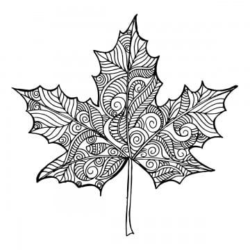 Hand Drawn Black And White Autumn Leaf Hand Drawn Black Png And Vector With Transparent Background For Free Download In 2020 How To Draw Hands Fall Drawings Fall Leaves Tattoo