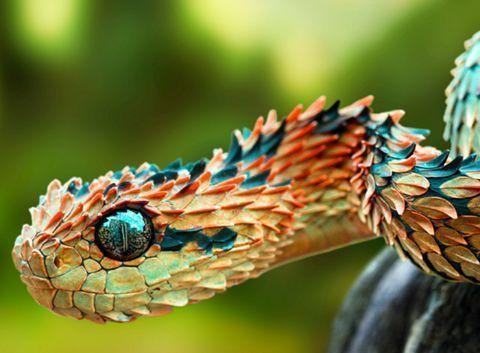 Eine Afrikanische Buschotter Schlange Schlangen Reptilien Reptilesphotography Afrikanische Buschotter E Haustier Schlange Schone Schlangen Reptilien