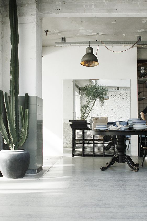 Using large plants as pieces of design | URBAN JUNGLE