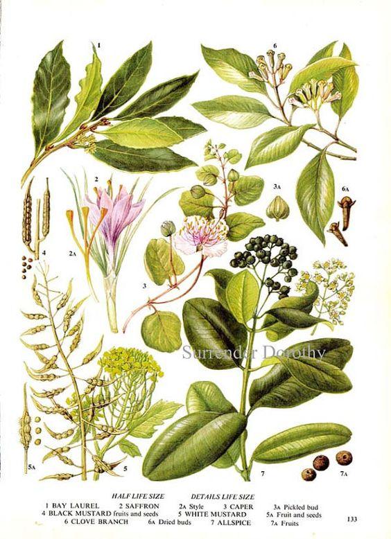 Bays, Flower food an