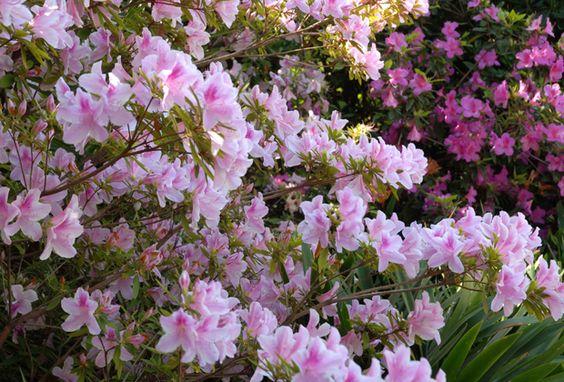 Septiembre y octubre son meses de alegría en los jardines. La llegada de la primavera nos hace disfrutar con todos los sentidos de nuestras plantas y nos regala esa magia que percibimos y es el fruto de todas las tareas realizadas durante el año. Los perfumes, los colores, la suavidad de los nuevos brotes, el atardecer con sus rojos que nos envuelve y emociona. La ingeniera Patricia Costantini, docente de Integral Instituto de Diseño, nos da algunos consejos para descubrir algunas de las…