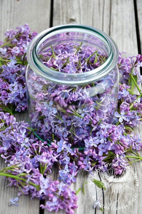 Fermented Lilac Tea Lilac Jar Tea