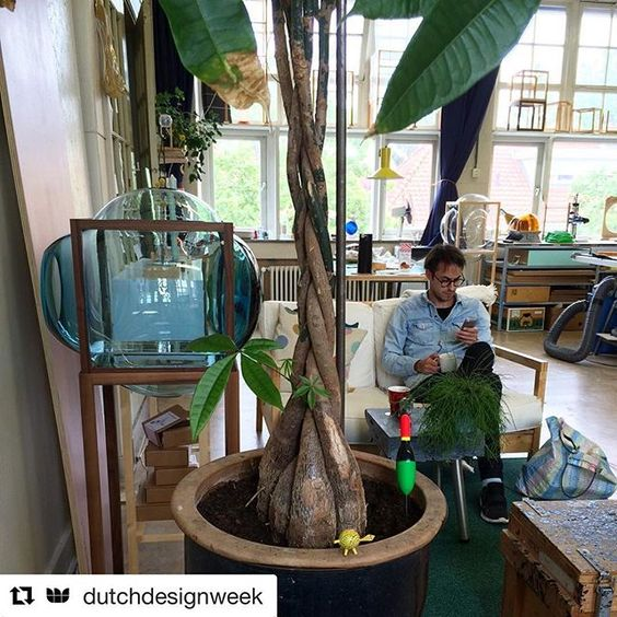 #Repost @dutchdesignweek ・・・ A short brake at our studio this afternoon. The studio is in an old school building, full of hidden treasures and a lot of natural light! Located in Eindhoven. If you look closely, you can spot some old and new work of ours ;-) This week @studiothiervandaalen takes over the DDW Instagram! #DDW16  #studio #atelier #glass #showcase #blue #cabinet #dutchdesign #palmtree #pachiraaquatica #break #bubbles #prototype #frame #studiothiervandaalen